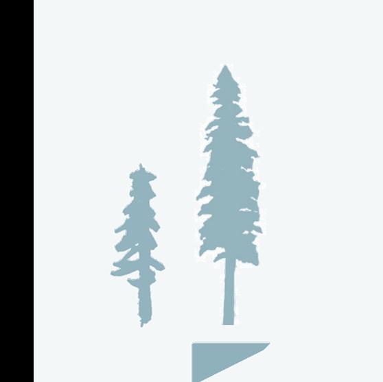 Sugar Pine Icon 3
