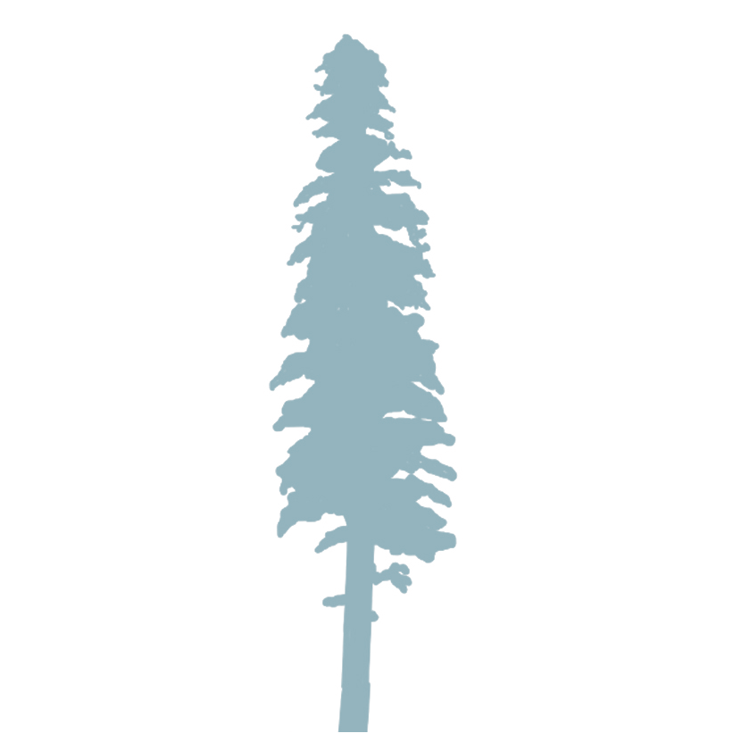 Sugar Pine Logo
